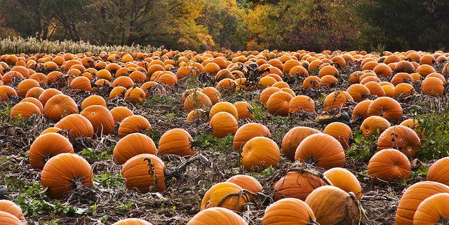 Pumpkin Capital of theWorld